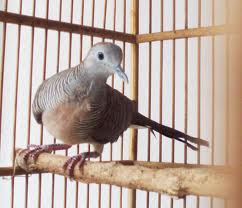 Burung Kecilku